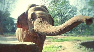 Preocupan los 1.200 animales en Zoológico