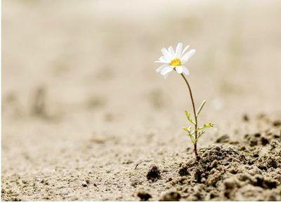 El milagro de la resiliencia
