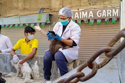 Gatos, perros y conejos abandonados en Pakistán