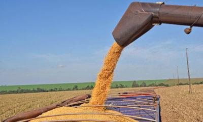 » Menos envíos de soja y trigo, el doble en maíz