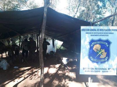 Destruyen 12 hectáreas de marihuana en Cadete Boquerón