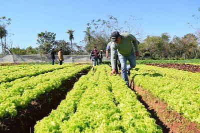 Productores agrícolas trabajan con incertidumbre