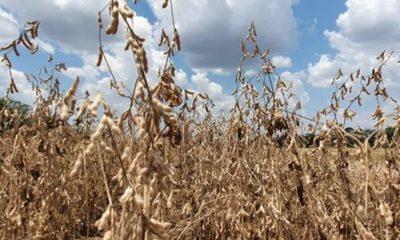 » El sector agropecuario continúa sus labores positivamente