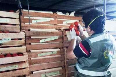 SENAVE destaca normal desarrollo del comercio internacional de productos vegetales
