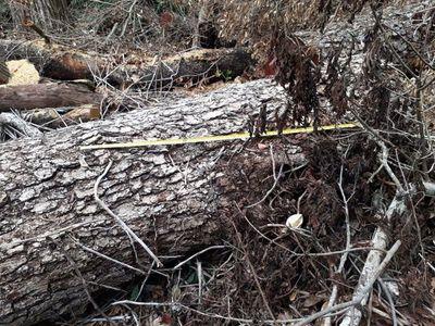 Inician investigación por el desmonte del Parque Nacional San Luis
