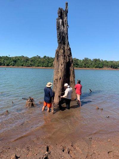 Aprovechan bajante para limpiar lago Acaray