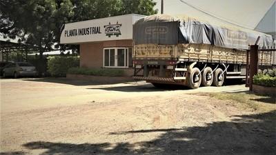 Cooperativa Fernheim ha logrado acopiar más de 5.000 toneladas de sésamo en sequía