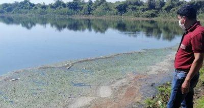 Limpio: Líquido residual estaría ocasionando masiva muerte de peces