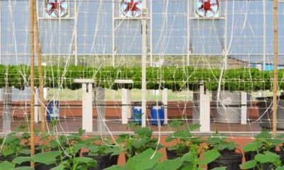 » Desarrollan tutoriales técnicos para la producción frutihortícola