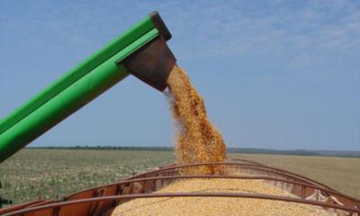 » Exportaciones de trigo caen más del 50%