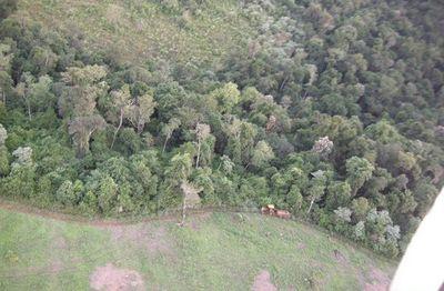 Más de 3.000 hectáreas de bosques naturales serán protegidos