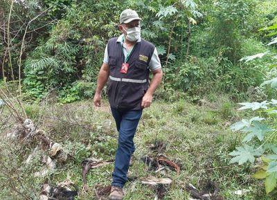 Intervienen matadero tras constatar que residuos iban a un arroyo