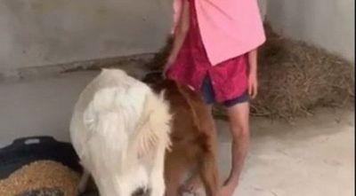 Video de Juliette durmiendo con sus cabras empujó a la imputación de su madre y padrastro