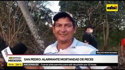 San Pedro: Alarmante mortandad de peces