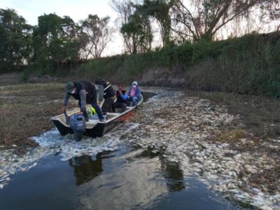 Sequía y falta de precipitaciones provoca mortandad de peces en Paraguay y Argentina