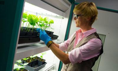 » Utilizan biotecnología para desarrollar vacuna contra el COVID-19