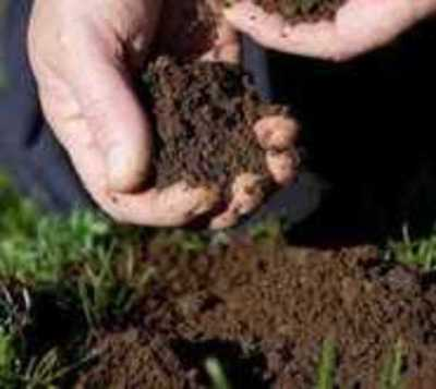 Paraguay ante el desafío de producir semillas de autoconsumo