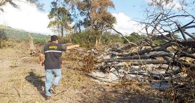 Persiste tala indiscriminada de árboles, según vecinos