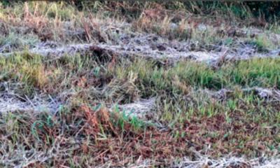 » Heladas inusuales afectaron a productores de Alto Paraná