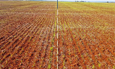 » Curasemilla biológico para trigo