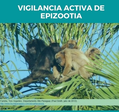 Paraguay en riesgo por fiebre amarilla ante casos registrados en Brasil