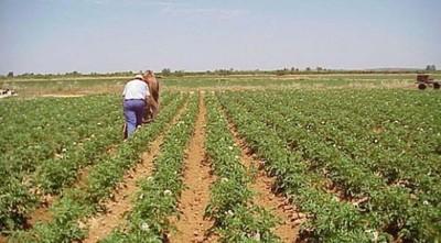 El COVID-19 puede ser devastador para empleo rural de Latinoamérica, dice OIT