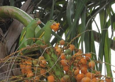 Fauna chaqueña se puede conservar con establecimientos ganaderos según investigación