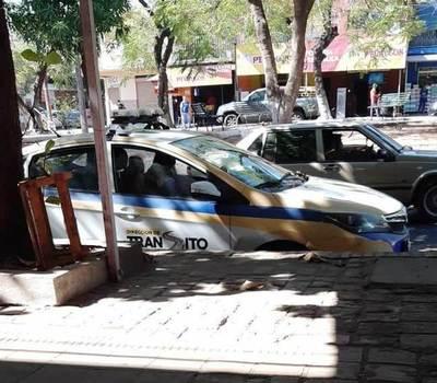 """Zorros andan """"relajados"""" en Luque • Luque Noticias"""