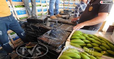 Marihuana «disfrazada» de bananas con destino a la Argentina cae gracias a canes