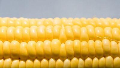 Atraso de la siembra y pocas lluvias podrían incidir en la merma de la producción del maíz