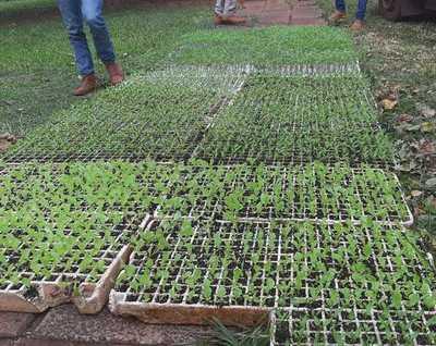Productores de Santa Rosa del Aguaray reciben cinco mil plantines de hortalizas