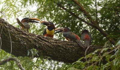 ITAIPU conmemora el Día de la Biodiversidad, comprometida con el cuidado de las especies de sus áreas protegidas