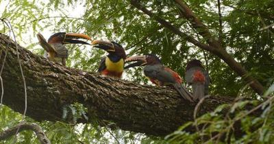 Itaipú conmemora el Día de la Biodiversidad