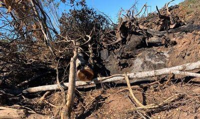 Caso Desmonte: Imputan a jefe de INFONA de Caazapa