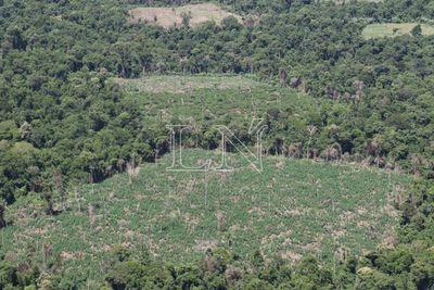 La maldición del Bosque Atlántico en Paraguay