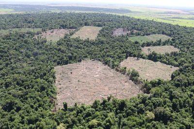 Así se deforesta el Bosque Atlántico del Alto Paraná