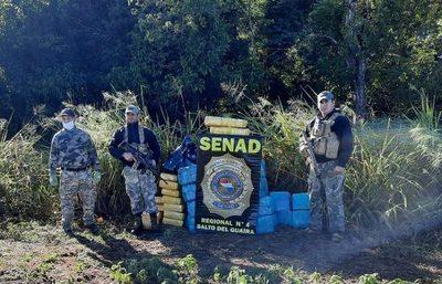 SENAD incautó más de 1.400 kilos de marihuana en la Reserva Morombí