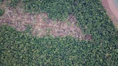 Solicitan colaboración de órganos competentes para frenar daños a bosques nativos