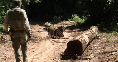 Arriesgar la vida por los bosques