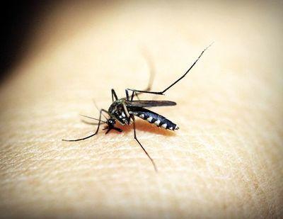 Piden no bajar la guardia frente al dengue