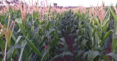 Impulsan programa de agricultura sustentable en San Pedro