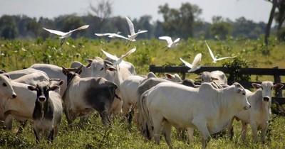 Fecoprod obtiene consultoría internacional para producción sostenible de carne