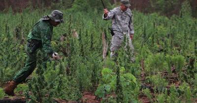 """Elaboran """"el mapa y la ruta"""" de la marihuana en el Paraguay"""