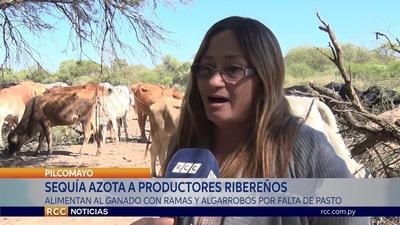 SEQUÍA AZOTA A PRODUCTORES RIBEREÑOS DEL CHACO PARAGUAYO