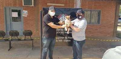 Fiscalía rescata a cachorro de puma que era ofrecido para la venta a través de WhatsApp