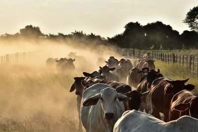 INDERT analiza aumentar precio de tierras en el Chaco
