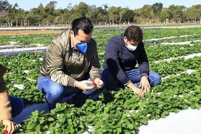 El MAG entregó implementos agrícolas a frutilleros de Areguá • Luque Noticias