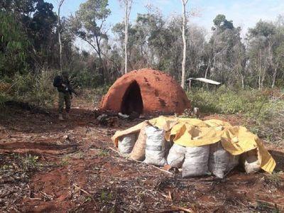 Tres aprehendidos por tala de árboles en Concepción