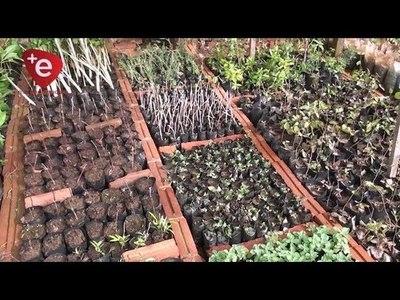 INVERNADERO MUNICIPAL REPRODUCE PLANTAS MEDICINALES Y ÁRBOLES NATIVOS