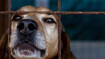 HOY / Condenan a hombre que mató a machetazos a un perro